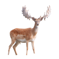 uploads moose moose PNG13 78