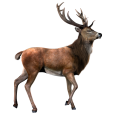 uploads moose moose PNG17 81