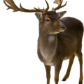 uploads moose moose PNG2 80