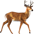 uploads moose moose PNG4 84