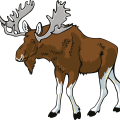 uploads moose moose PNG43 72