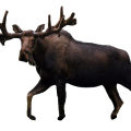 uploads moose moose PNG64 71