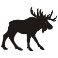 uploads moose moose PNG8 69