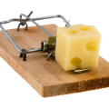 uploads mouse trap mouse trap PNG35 62