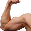 uploads muscle muscle PNG1 11