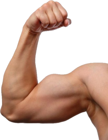 uploads muscle muscle PNG1 16