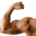 uploads muscle muscle PNG12 12