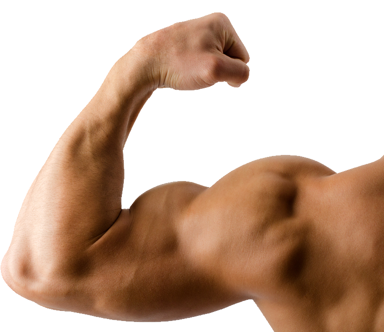uploads muscle muscle PNG12 5
