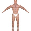 uploads muscle muscle PNG17 22