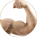 uploads muscle muscle PNG31 13
