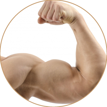 uploads muscle muscle PNG31 8