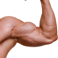 uploads muscle muscle PNG52 51
