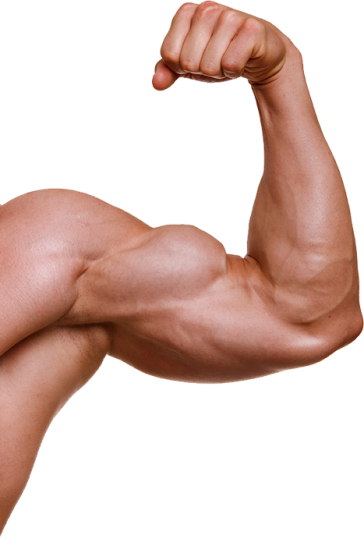 uploads muscle muscle PNG52 6