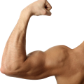 uploads muscle muscle PNG6 23