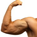 uploads muscle muscle PNG7 48