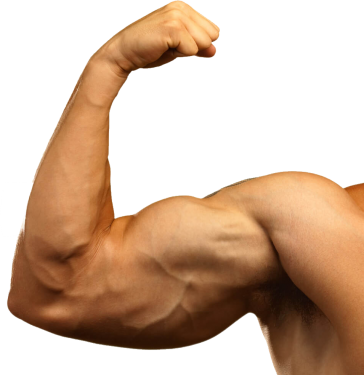 uploads muscle muscle PNG7 18