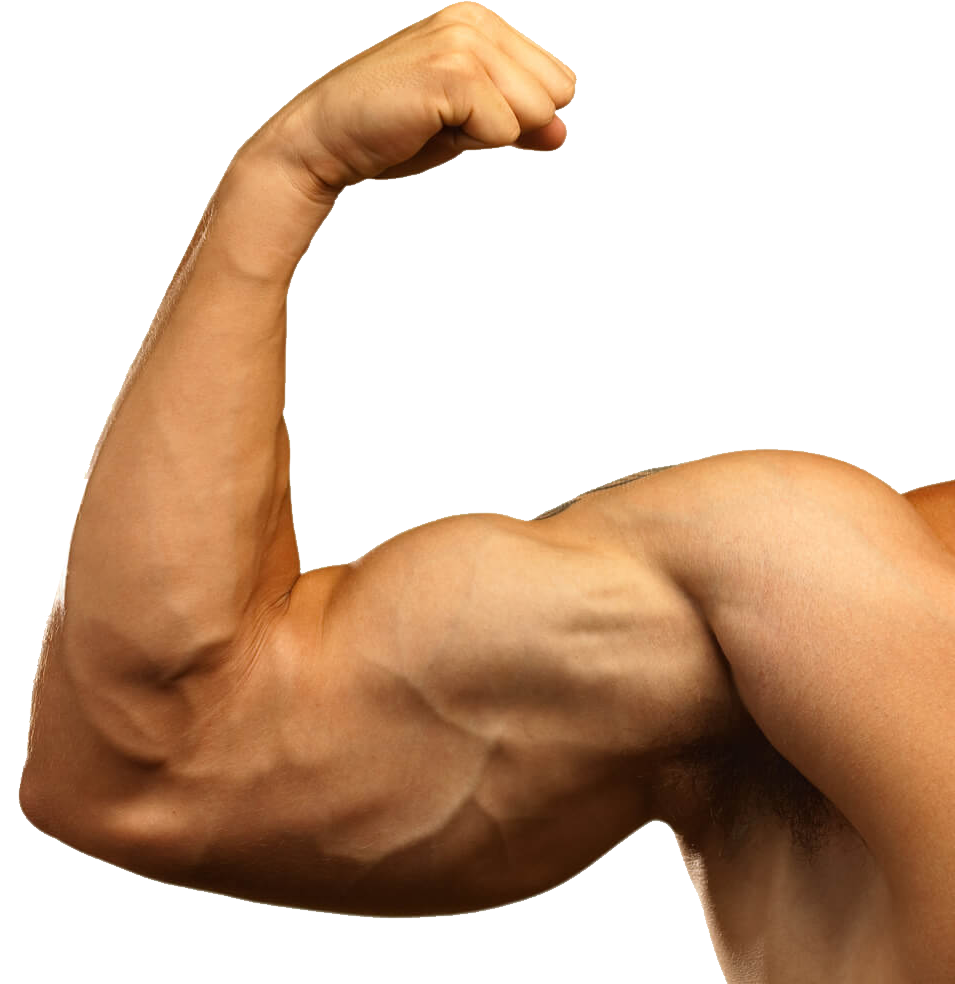 uploads muscle muscle PNG7 4