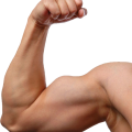 uploads muscle muscle PNG8 24