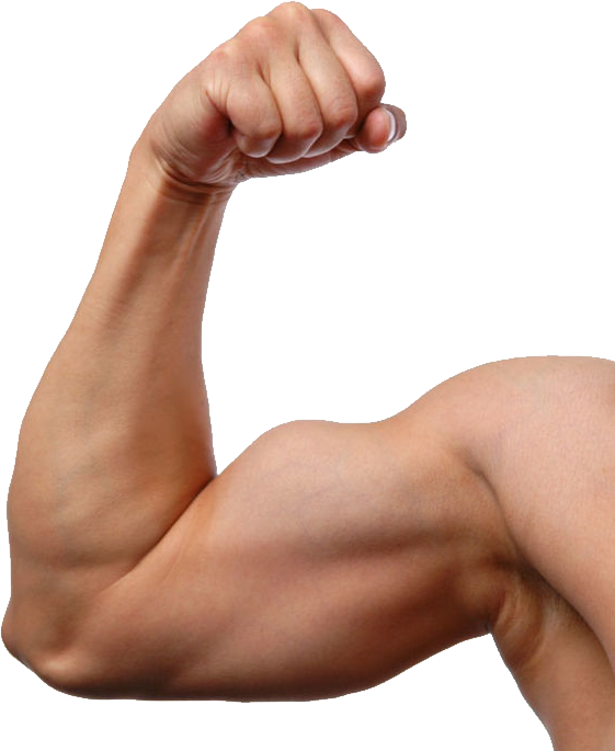 uploads muscle muscle PNG8 3