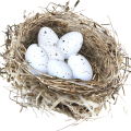 uploads nest nest PNG12 9