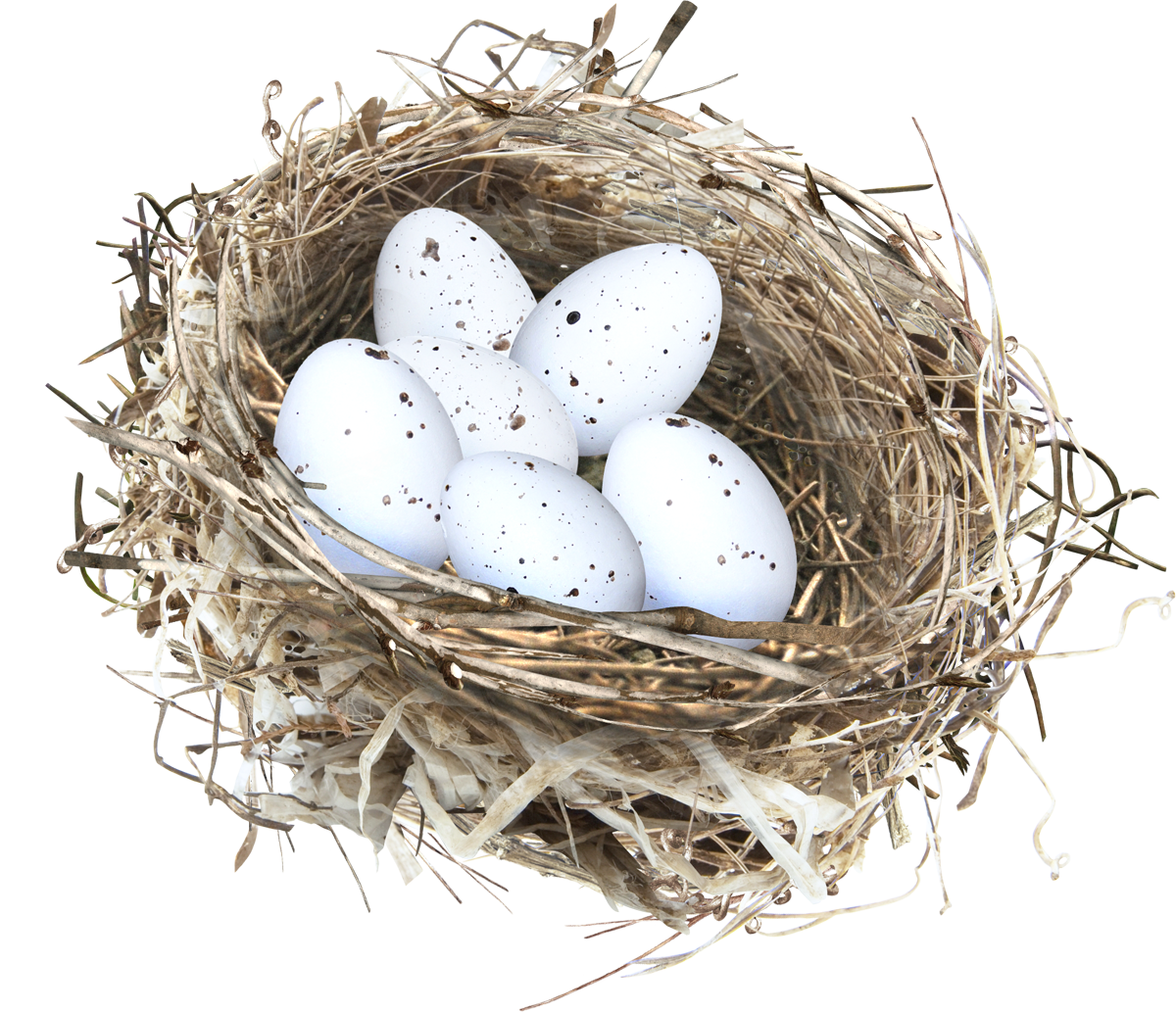 uploads nest nest PNG12 3