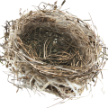 uploads nest nest PNG14 20