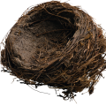 uploads nest nest PNG15 81