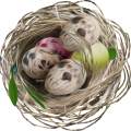uploads nest nest PNG17 21