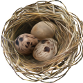 uploads nest nest PNG18 25