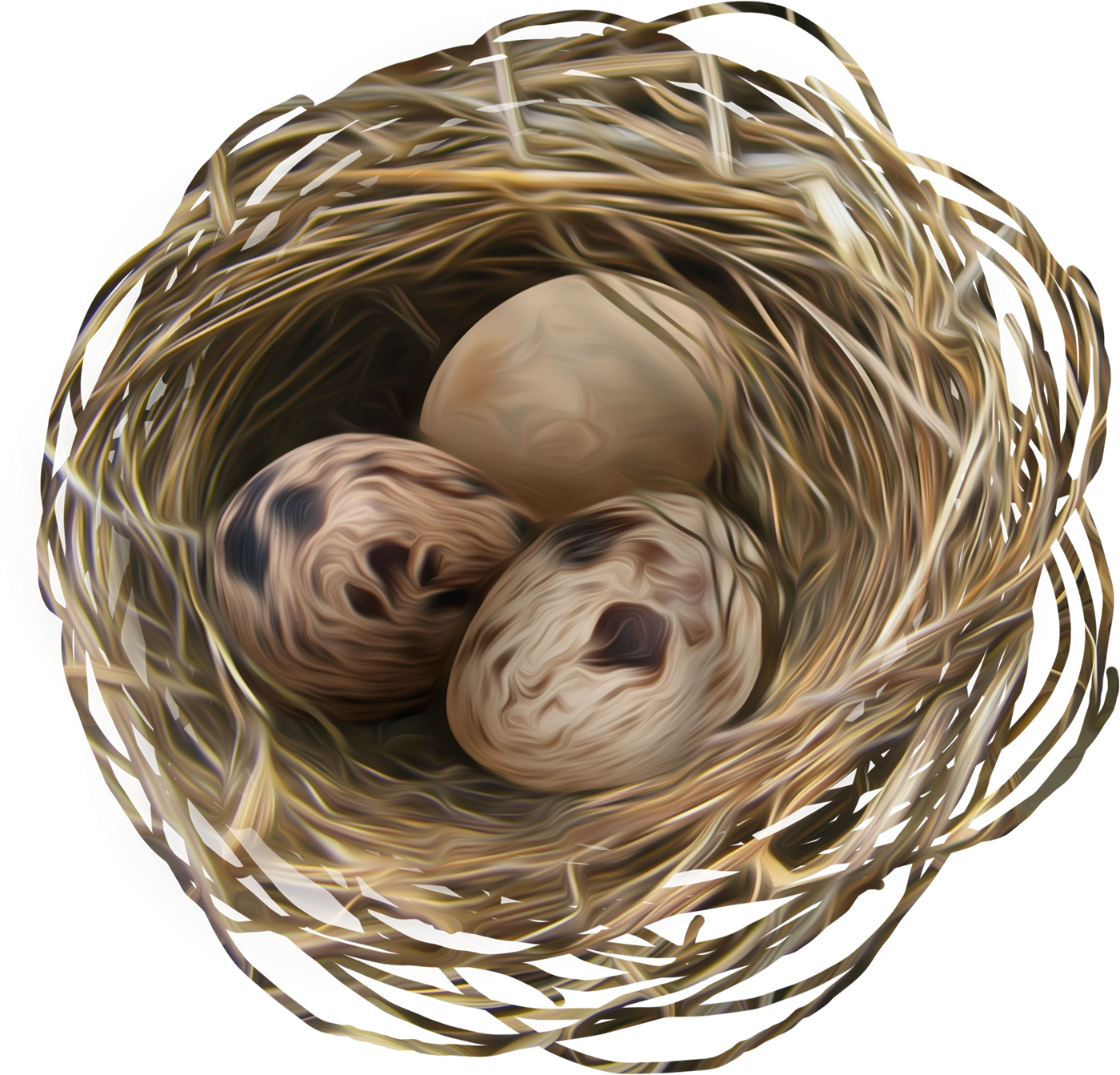 uploads nest nest PNG18 5