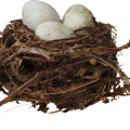 uploads nest nest PNG2 65