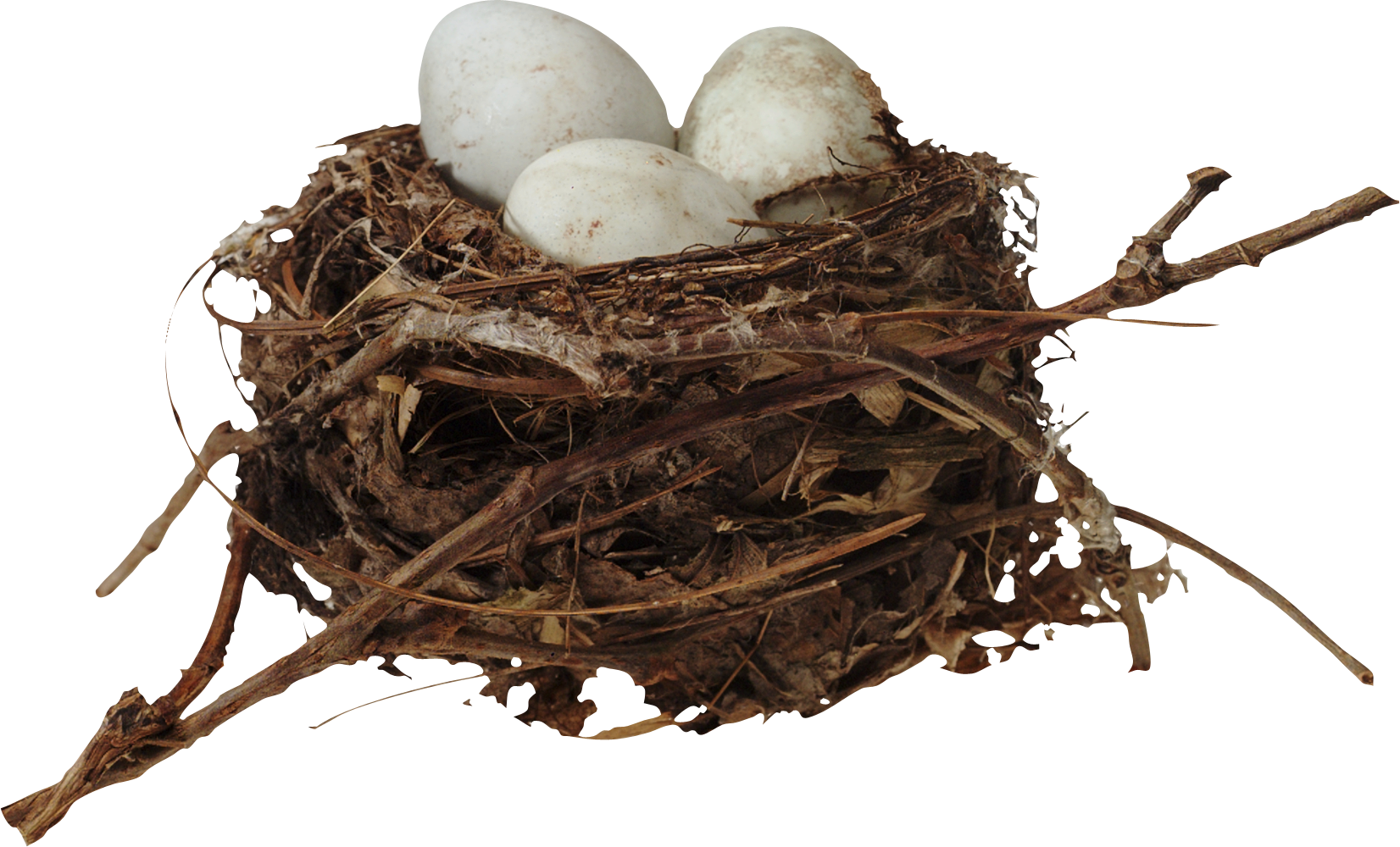 uploads nest nest PNG2 4