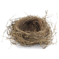 uploads nest nest PNG20 13