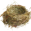 uploads nest nest PNG22 24