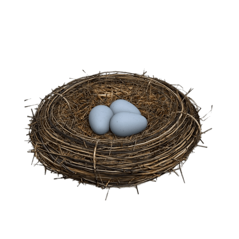 uploads nest nest PNG23 4