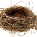 uploads nest nest PNG25 18