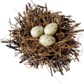 uploads nest nest PNG28 25