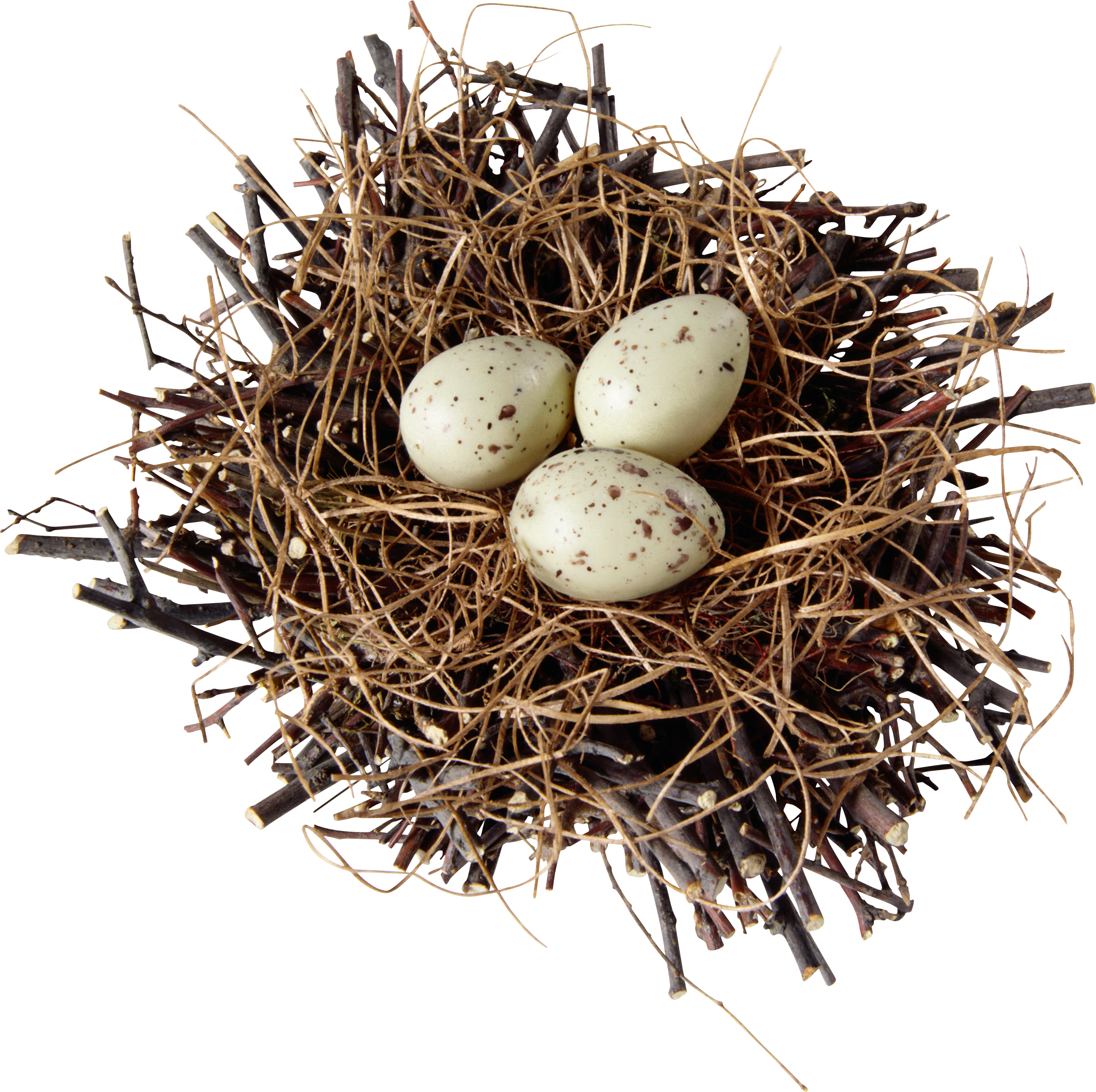 uploads nest nest PNG28 85