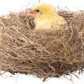 uploads nest nest PNG29 25