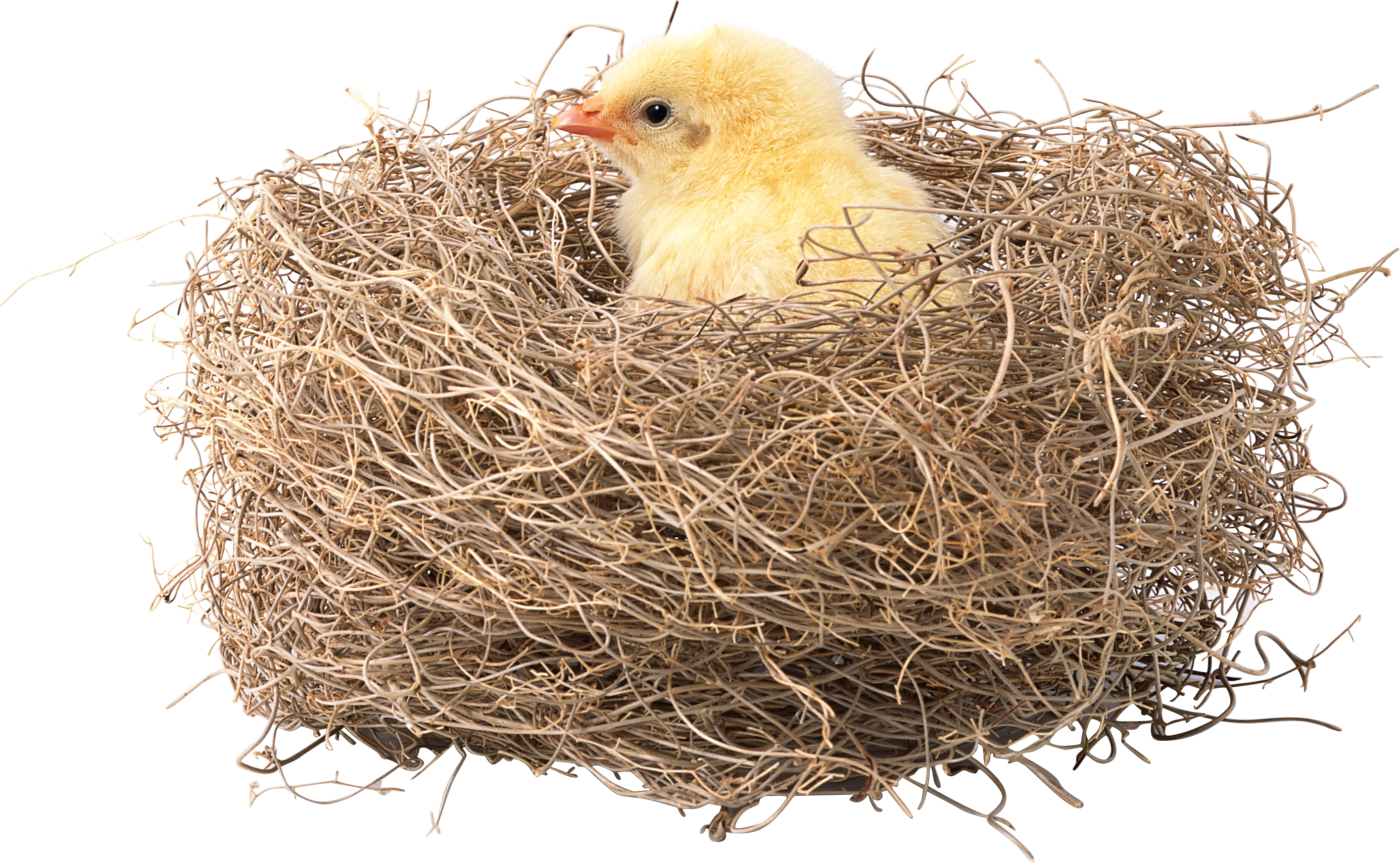 uploads nest nest PNG29 4