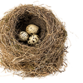 uploads nest nest PNG30 50