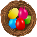 uploads nest nest PNG38 24