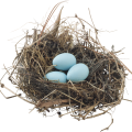 uploads nest nest PNG4 12