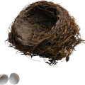 uploads nest nest PNG40 16