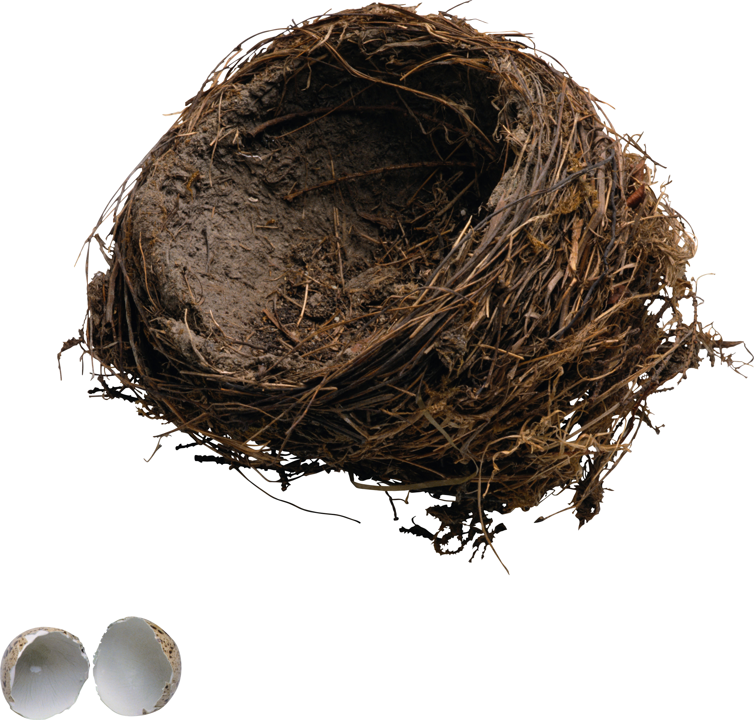 uploads nest nest PNG40 64