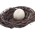 uploads nest nest PNG45 18