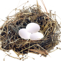 uploads nest nest PNG46 23