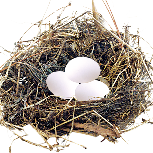 uploads nest nest PNG46 3