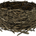 uploads nest nest PNG5 20