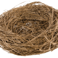 uploads nest nest PNG50 6
